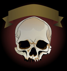 greeting card with skull and ribbon for text on a vector image