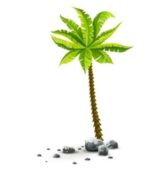 Isolated tropical coconut palm vector image