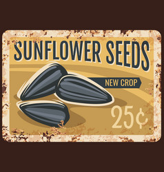 sunflower seeds metal rusty plate nuts cereals vector image