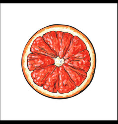 Top view round slice half of ripe grapefruit red vector