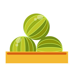 box with big ripe watermelons isolated cartoon vector image