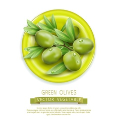 branch with green olives lying on a plate vector image