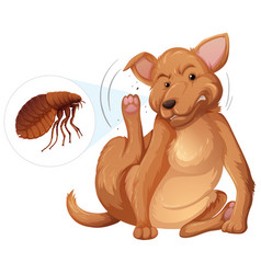 Dog itching flea concept vector