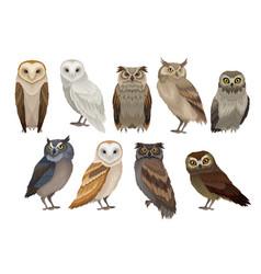 Flat set of different species of owls wild vector