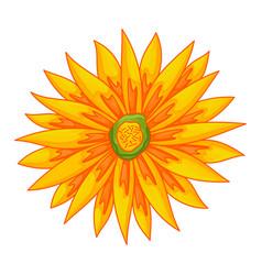 Floral botanical flower color ornament flat vector