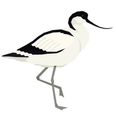 pied avocet bird isolated object vector image