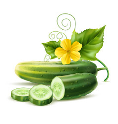 realistic cucumber green haulm leaf flower vector image