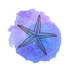 star fish vector image