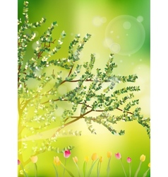 Tulip garden or field in spring EPS 10 vector