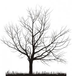 cherry tree in winter vector image