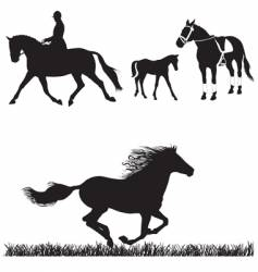 horse collection vector image vector image