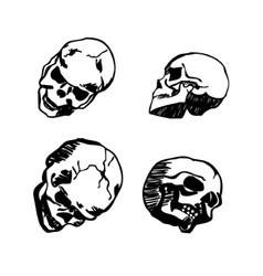 skull in different positions hand drawing vector image vector image