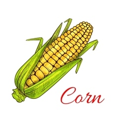 Corn cob vegetable sketch vector