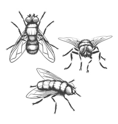 Hand drawn flies vector