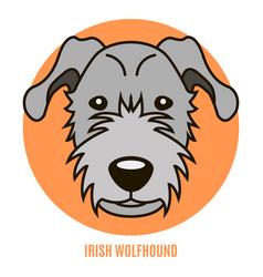 Portrait of irirsh wolfhound vector