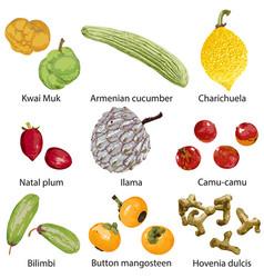 Set fruits on white background vector