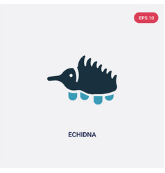 two color echidna icon from animals concept vector image