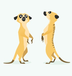 meerkat cartoon vector image