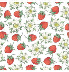strawberry collestion 2-02 vector image