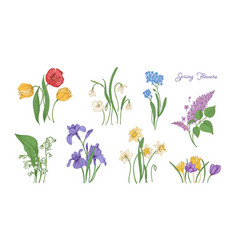 Bundle of natural drawings of spring flowers vector