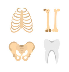 human bones icon set flat style vector image