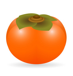 Persimmon isolated vector