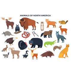 Animals north america vector
