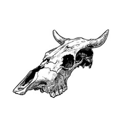 bull skull vector image vector image
