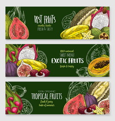 exotic tropical fruit blackboard banner set vector image