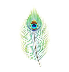 peacock feather realistic vector image