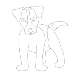 russell terrier puppy vector image
