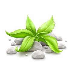 plant with green leaves in vector image vector image