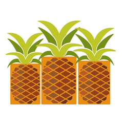 tropical ripe pineapples with long leaves isolated vector image vector image
