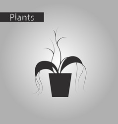 black and white style icon plant in a pot vector image