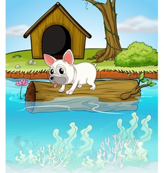 A dog above floating trunk vector
