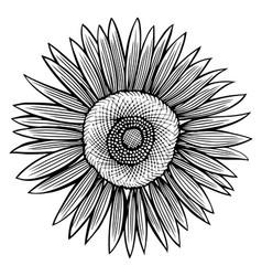doodle sunflower contour vector image