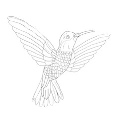 bird sketch icon isolated on background hand vector image