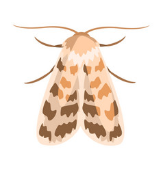 Ash sphinx moth or manduca jasminearum colorful vector