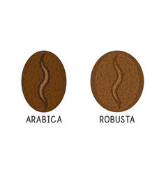 Coffee grains robusta and arabica flat icon on vector