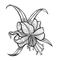 Five petals on a stem vector