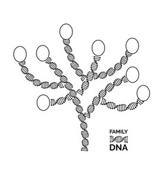 genealogy tree for dna ancestors isolated vector image