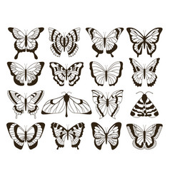 Monochrome butterflies black and white drawing vector