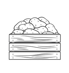 ripe potatoes in wooden box vector image