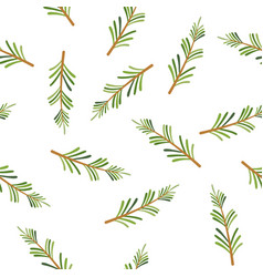 rosemary seamless pattern vector image
