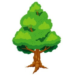 Large tree vector image vector image