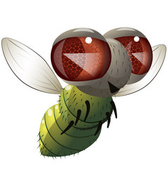 Comical fly vector