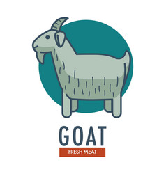 Goat fresh meat promotional emblem with domestic vector