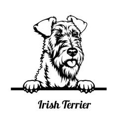 Peeking dog - irish terrier breed - head isolated vector