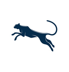 puma or black panther isolated wildcat animal vector image