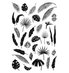 silhouette palm leaves black jungle plants vector image